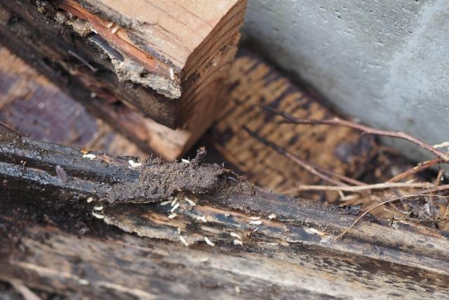 害虫・害獣駆除の料金相場と見積もりを取る際の注意点とは